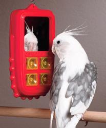 rääkiv lind